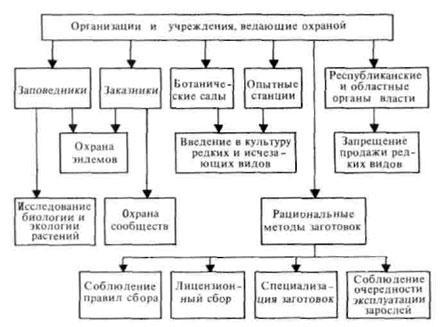 Охрана и рациональное использование лекарственных растительных ресурсов (Красная книга СССР) .